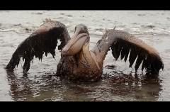 24.Golfo del Messico.Petrolio a mare.jpg
